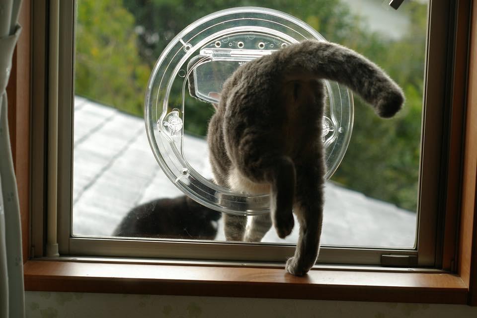 ペットドア取り付け 窓ガラスやガラス戸にも取り付けします