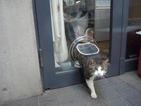 ガラス取り付けペットドア