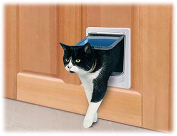 ペットドアをくぐる猫