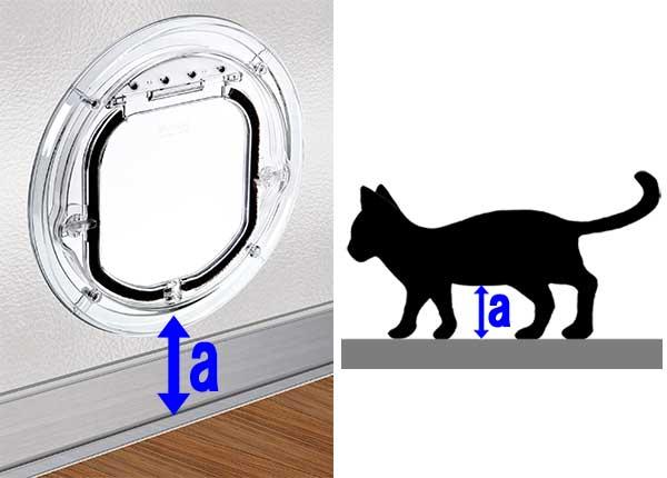 cat_height.jpg